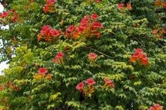Belles fleurs en nature images libres de droits