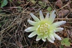 Belles fleurs en nature photos stock