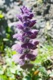 Belles fleurs en nature image stock