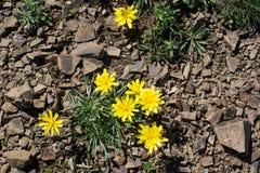 Belles fleurs en nature photo stock