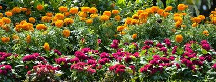 Belles fleurs en stationnement photo stock