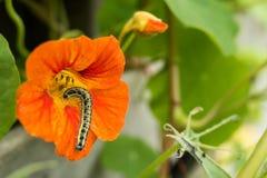 Belles fleurs et chenilles décorant la nature Images stock