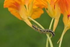 Belles fleurs et chenilles décorant la nature Photographie stock libre de droits