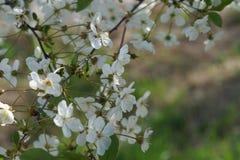 Belles fleurs et couleurs vertes image stock