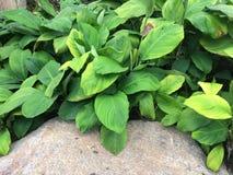 Belles fleurs et feuilles de vert photo libre de droits