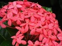 Belles fleurs exotiques rouges couvertes par la rosée Photo stock