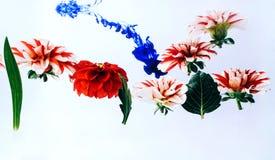 Belles fleurs faisantes de la lévitation sous l'eau images stock