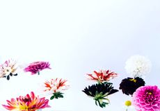 Belles fleurs faisantes de la lévitation sur le fond lumineux photo libre de droits