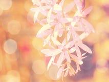 Belles fleurs faites avec des filtres de couleur de vintage Photos stock