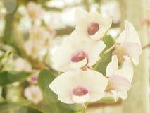 Belles fleurs faites avec des filtres de couleur de vintage Image libre de droits