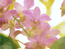 Belles fleurs faites avec des filtres de couleur de vintage Photographie stock
