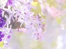Belles fleurs faites avec des filtres de couleur de vintage Images stock
