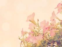 Belles fleurs faites avec des filtres de couleur de vintage Image stock