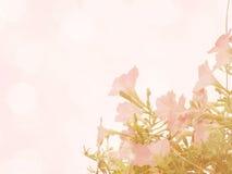 Belles fleurs faites avec des filtres de couleur de vintage Photo stock