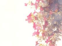 Belles fleurs faites avec des filtres de couleur de vintage Images libres de droits