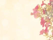 Belles fleurs faites avec des filtres de couleur de vintage Photos libres de droits