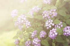 Belles fleurs faites avec les filtres colorés Photos stock