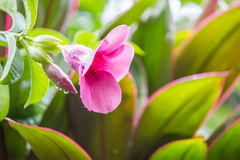Belles fleurs fraîches Images libres de droits