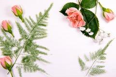 Belles fleurs fraîches d'une fougère de camomille de rose sur un fond blanc avec un endroit pour l'inscription Photo stock