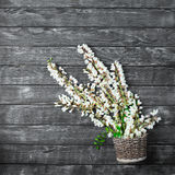 Belles fleurs fraîches de ranunculus sur le fond en bois photographie stock