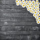 Belles fleurs fraîches de ranunculus sur le fond en bois images libres de droits