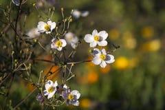 Belles fleurs, image avec la petite profondeur du champ, foyer sélectif photographie stock