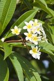belles fleurs Israël Photos libres de droits