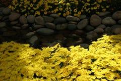 Belles fleurs jaunes Photo libre de droits
