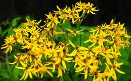 Belles fleurs jaunes Image stock