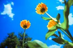 Belles fleurs jaunes Photo stock