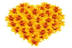 Belles fleurs jaunes en forme de coeur photographie stock libre de droits