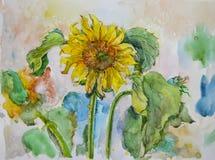 Belles fleurs jaunes pittoresques lumineuses peintes des tournesols par l'aquarelle Photos stock