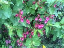 Belles fleurs majestueuses photo stock