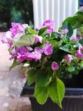 Belles fleurs minuscules photo stock