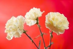 Belles fleurs molles Images stock