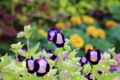 Belles fleurs naturelles Image stock