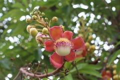 Belles fleurs naturelles Images libres de droits