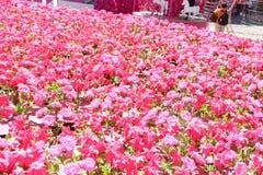 Belles fleurs naturelles Photographie stock libre de droits
