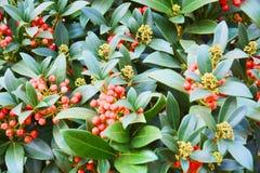Belles fleurs oranges rouges fraîches, pétales, fond naturel, beauté de jardin Images libres de droits