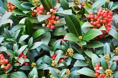Belles fleurs oranges rouges, pétales, fond naturel, beauté de jardin Photographie stock libre de droits