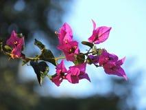 Belles fleurs pendant l'après-midi Photo libre de droits
