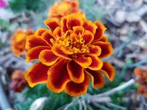 Belles fleurs pendant la saison d'été en parcs, maison dehors photo stock