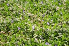 Belles fleurs pourprées image stock