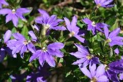 Belles fleurs pourprées Images libres de droits