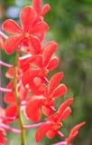 Belles fleurs pourprées d'orchidée Images stock