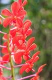 Belles fleurs pourprées d'orchidée Photos libres de droits