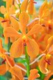Belles fleurs pourprées d'orchidée Photo libre de droits