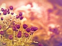 Belles fleurs pourpres Image libre de droits