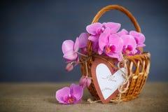 Belles fleurs pourpres de phalaenopsis Photos stock