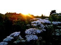 Belles fleurs rencontrant le matin ! image libre de droits